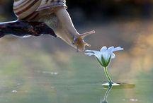 Természet csodái