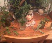 Plantes / La verdure dans ma vie