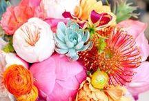 Flowers & Nature