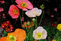Garden Blossoms / Beautiful, Striking Flowers in their Natural Setting.