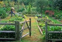 Garden Inspiration / by Beth Cupitt