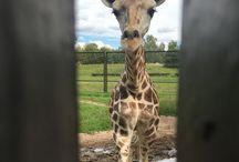 Zoo / My work... my life... my everything