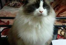 Cats / Meow