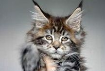 Cute animals / Mostly kittens.