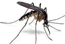 Pest Control / Keep unwanted bugs away from the garden and house.