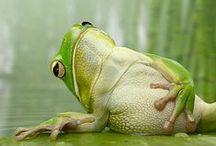 Feeling Froggie! / My love of frogs.