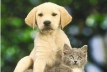 Books For Pets / Excellent books from a great selection for Cats, Dogs, Horses, Birds, Fish & Aquariums & more.