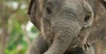 • antidepressants » Elephants • / Word is a better place with elephants