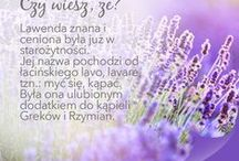 Lawendowe love