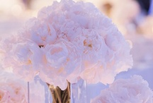 wedding ideas ♥ / cant wait for this day..