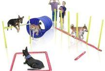 Dog Training, snacks & care / by Amanda Dominy