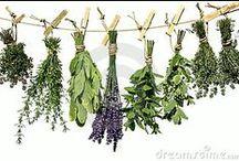 Gardening - Herbs / by Amanda Dominy