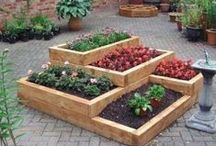 Gardening - square foot / potager / raised bed / by Amanda Dominy