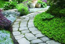 Gardening - down the garden path / by Amanda Dominy