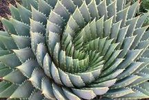 Gardening - succulents, rockery, xeriscaping, waterwise / by Amanda Dominy