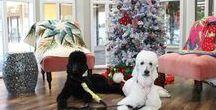 A Very Merry Kiki Christmas 2016 / Christmas at Kiki's Quilt Shack