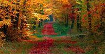 Caminhos /  paisagens naturais