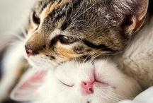 ღ Cute Animals ღ / by Yae-Rang Schumacher