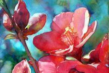 Watercolour / by Cheryl Drew