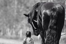 Moje końskie bzdety /  Coś dla wszystkich koniarzy.