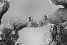 Animal love in black & white
