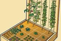 Vegetable/Flower Garden / Ideas for the family vegetable garden. / by Bonnie Chretien