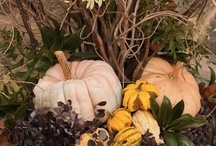 Halloween  / by Southern Living Plant Collection