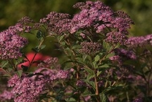 The Top 5 Plants for Spring / by Southern Living Plant Collection