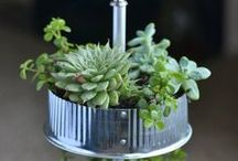 lil indoor plants