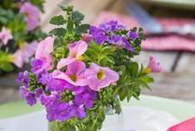 Ready to Impress Container Gardens / With these already planted containers, we've done the dirty work. Try our quick and easy decorating tips on each tag and enjoy beautiful fuss-free flowers anytime and anywhere you want instant style. / by Southern Living Plant Collection