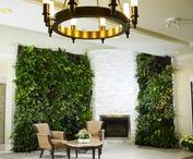 Botanical home decor / This is my selection to uplift any home environment with the magic of flowers.   Esta es mi selección para mejorar cualquier ambiente del hogar.