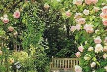 ✿❀ Country Garden ✿❀ / Gardening, cottage garden, English country garden, English flowers, small garden ideas, growing flowers, cut flowers, small outdoor spaces, compact garden, colourful garden, gardening ideas, holly hocks, fox gloves, roses, English rose, rose garden, garden seating, bench, landscape gardening