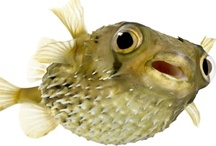 Fish Articles from Pet Care Corner / by PetSolutions Pet Supplies