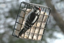 Wild Bird Articles from Pet Care Corner