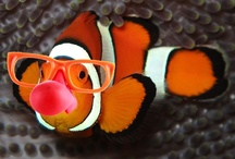 Live Fish Articles from Pet Care Corner