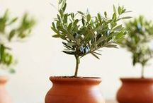 Gifts for the Gardener / Special gifts for any garden-lover!