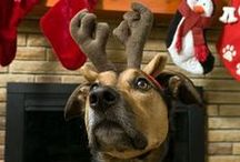 Holiday Gift Ideas for Your Dog / by PetSolutions Pet Supplies