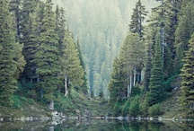 "The Forest / ""Observe the beauty of forest.""  ― Lailah Gifty Akita / by Earmark Social Bridgette S.B."