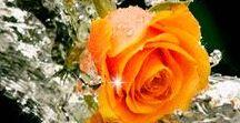Virágok  / Flowers