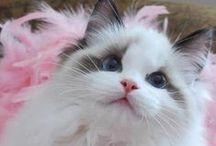 Cats & Kittens / by Cloe