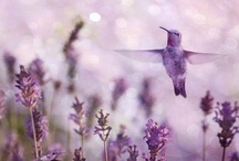 Purple Passion / Everything purple I love / by Fanny Zara