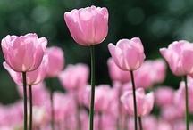 Think Pink / by Fanny Zara