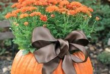 Fall Goodies / by Katie Tribula