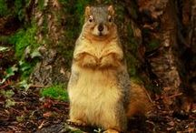 Squirrels of Pacific / Check out our newest photo series on the furry inhabitants of Pacific. / by Pacific University
