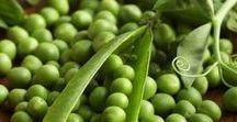 Pflanzen: Erbse / Erbse / Pea + Hülsenfrüchtler / Fabaceae