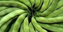 Pflanzen: Bohnen / Bohnen / Bean + Hülsenfrüchtler / Fabaceae