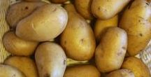 Pflanzen: Kartoffel / Kartoffel / Potato + Gemüse / Vegetables