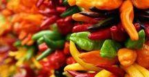 Pflanzen: Peperoni - Chili (Gemischt / Mixed) / Peperoni - Chili / Pepperoni - Chili pepper + Gemüse / Vegetables + Gewürz / Spice