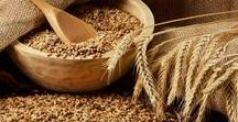 Pflanzen: Getreide - Weizen - Samen / Getreide - Weizen - Samen / Grain - Wheat - Seed