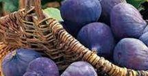 Pflanzen: Feigen / Feigen / Fig + Obst - Früchte / Fruit